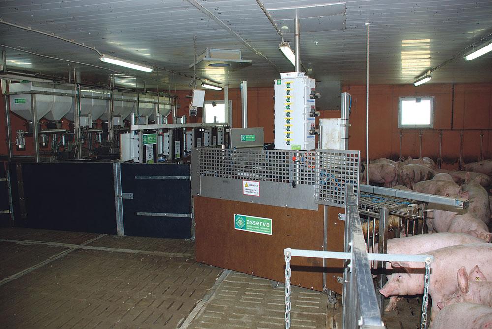 Les 90 porcs de la bande sont dans la zone de vie, à droite