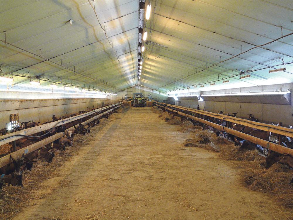batiment-avicole-production-caprine-lait-chevre