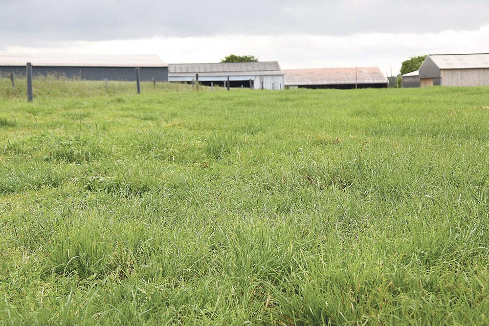 bovin-lait-velage-tarissement-gaec-broceliande-programme-alimentaire-lactation
