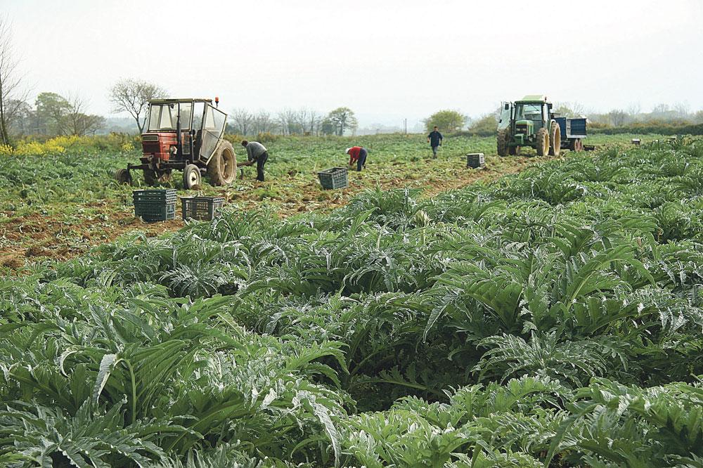 Photo of Recrutement de saisonniers étrangers : La MSA accompagne les employeurs de mains d'œuvre agricole