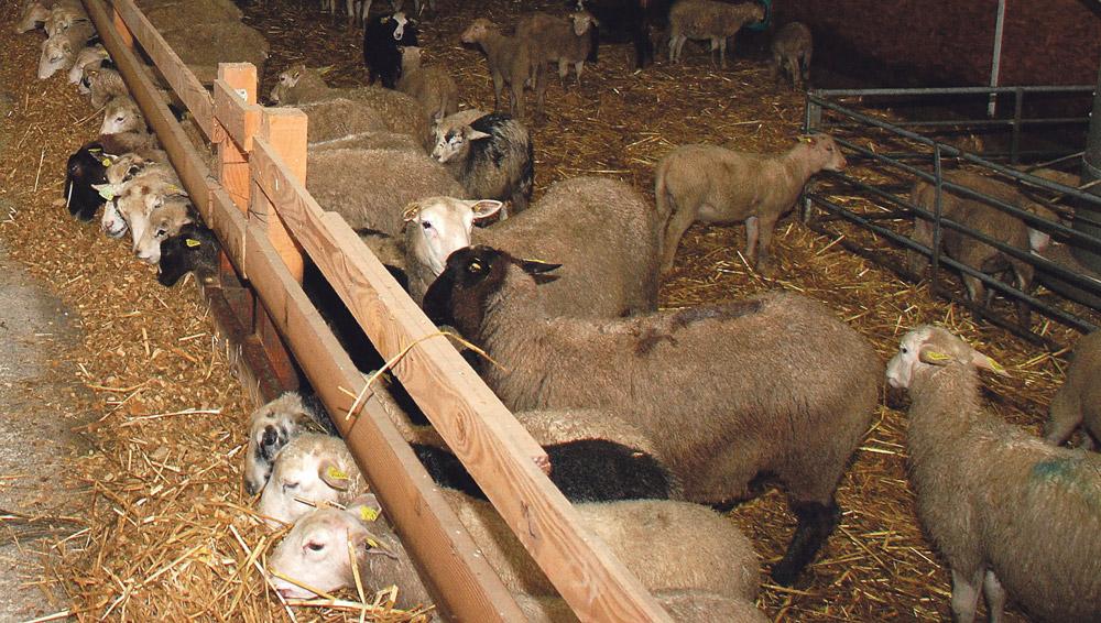 Photo of Après une année ovine atypique, espoir en 2014