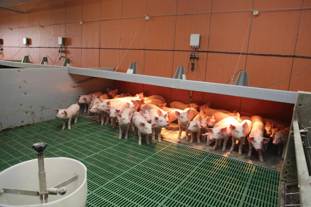 niche-batiment-porc-confort-travail-solution-innovante
