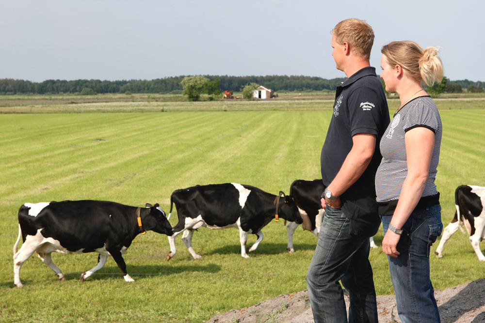 norme-nitrate-agronomie-elevage-intensif-exploitation-bovine
