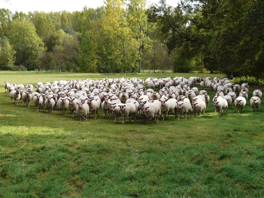 ovin-soutien-production-marche-mondial