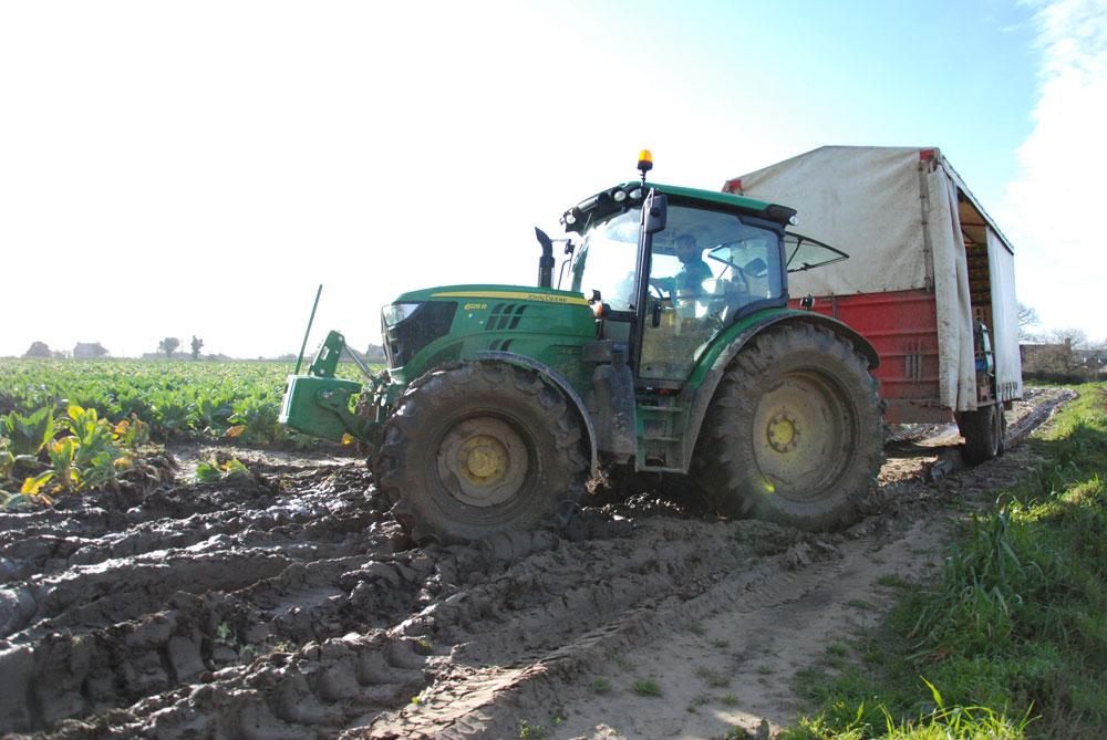 production-legume-chou-fleur-recolte-bretagne