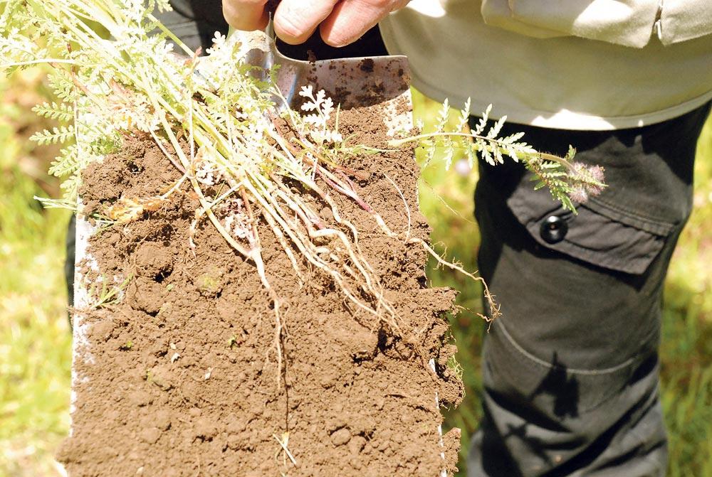 Photo of Les plantes jouent les micro-sous-soleuses