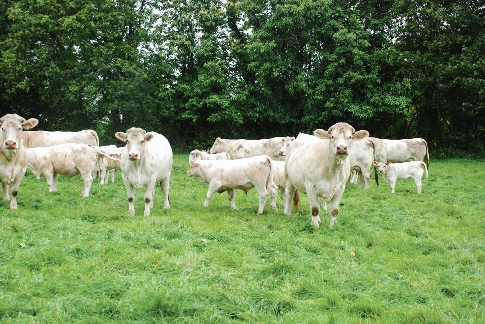 Photo of Viande bovine : la piste de la productivité animale