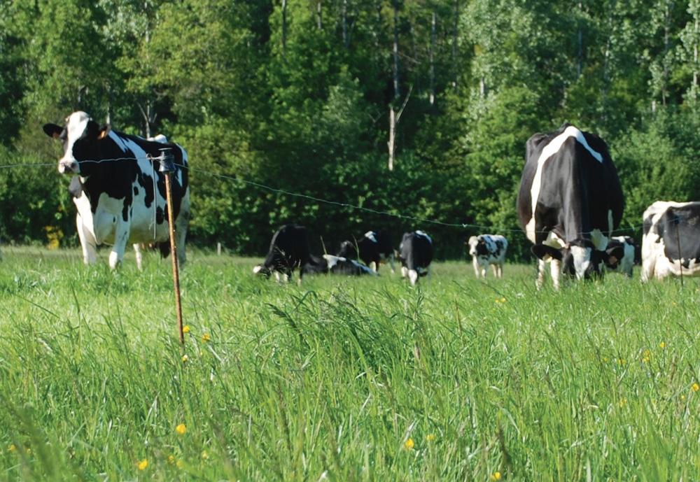 Photo of Cinq nouveaux projets d'agriculture écologiquement performante