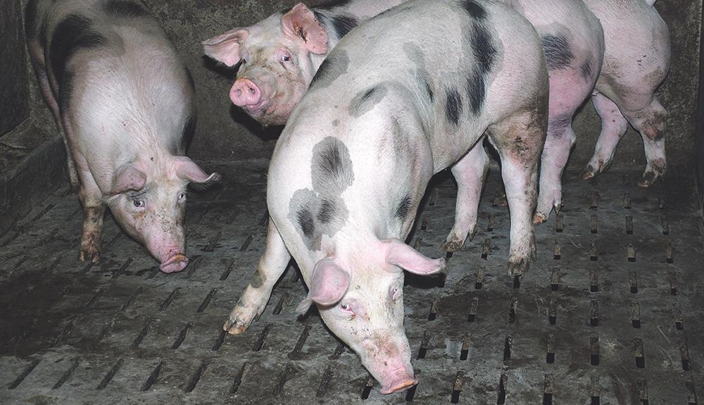 crp-comite-regional-porcin-bretagne-abatteur-grille-paiement-22-mai-2014