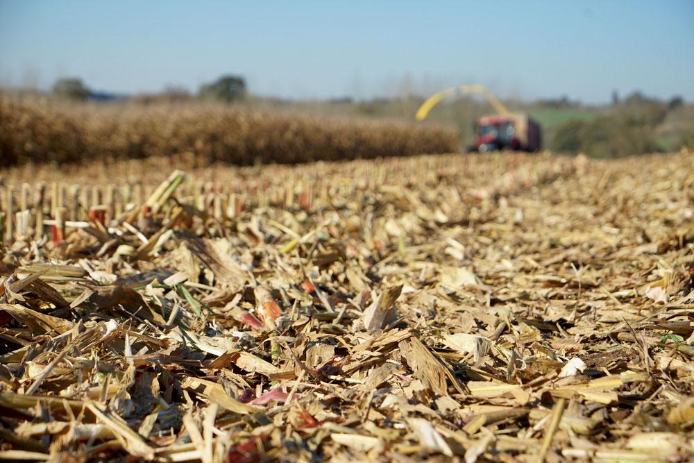 Photo of Des économies grâce au maïs épi
