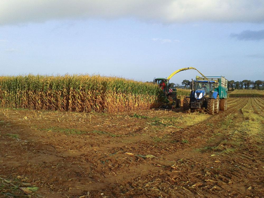 Photo of La production européenne de maïs rehaussée à 59,4 Mt