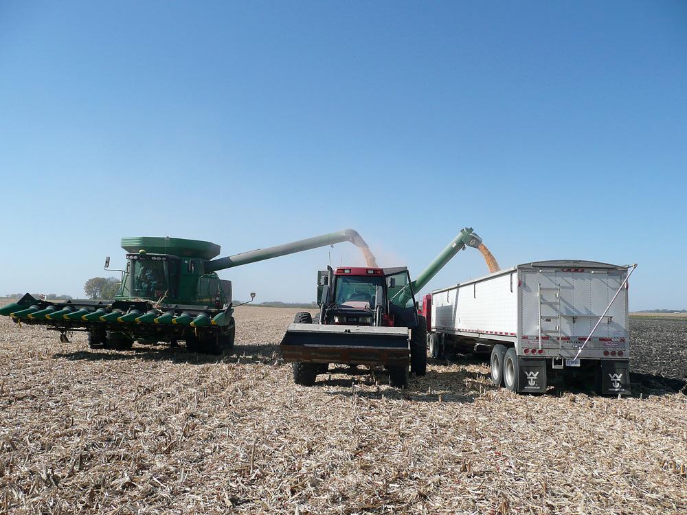 marche-americain-ble-cereale-mais-stock