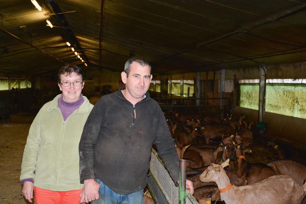 Photo of Les chèvres ont remplacé les canards