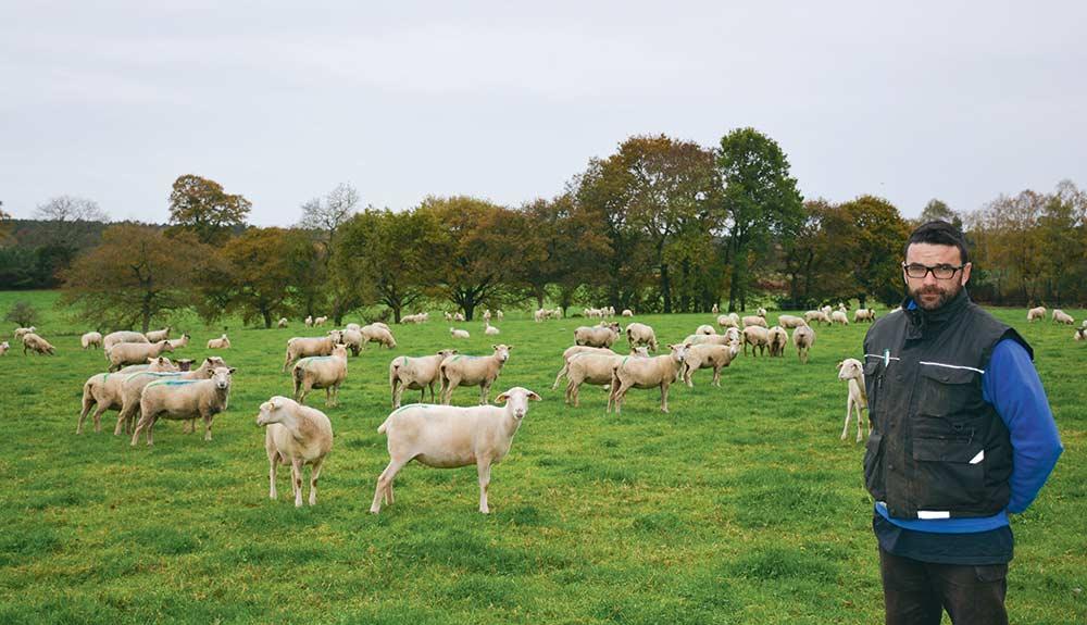 ovin-agneau-brebis-gestation-alimentation-foin-herbe-anthony-civel