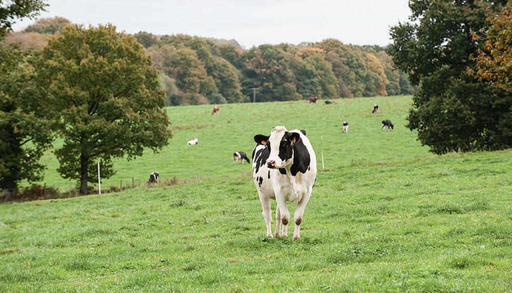 prim-holstein-res-agri-assemblee-environnement-gaz-effet-serre