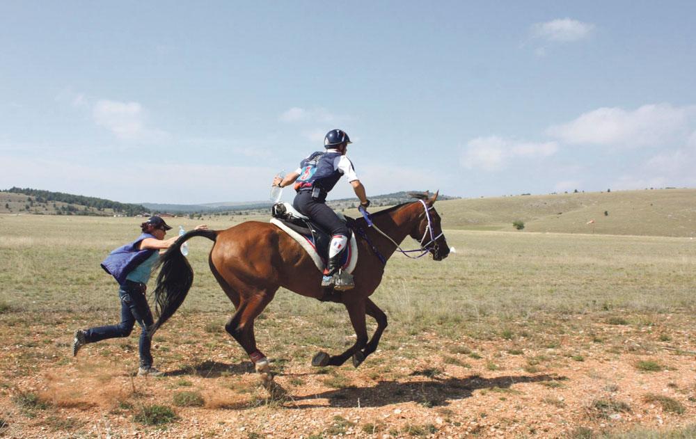cheval-breton-plourivo-champion-monde-poly-elevage-coat-frity