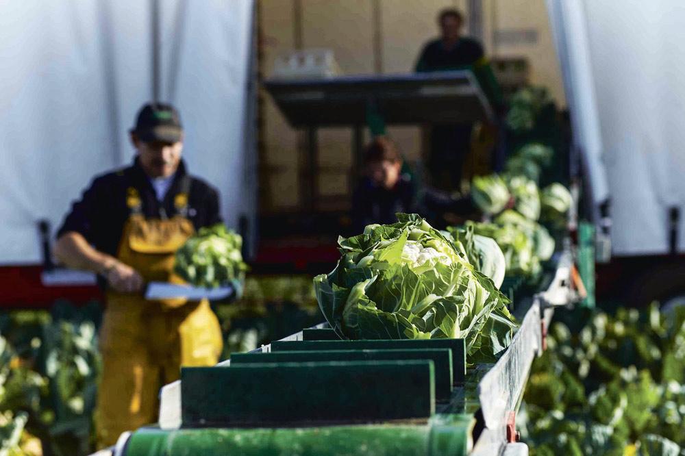 choux-fleur-meteo-climat-froid-production-legume-climat