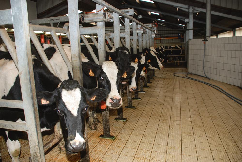 prix-lait-production-marche-vache-laitiere-matiere-premiere