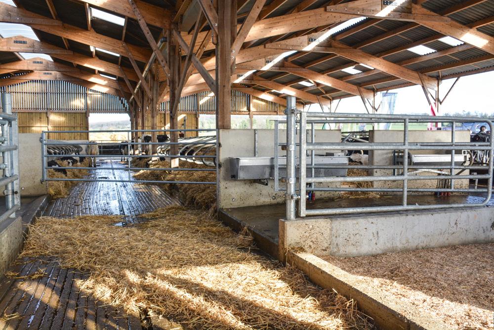 batiment-vache-laitiere-lait-prim-holstein-traite-logette-fumier-engrais
