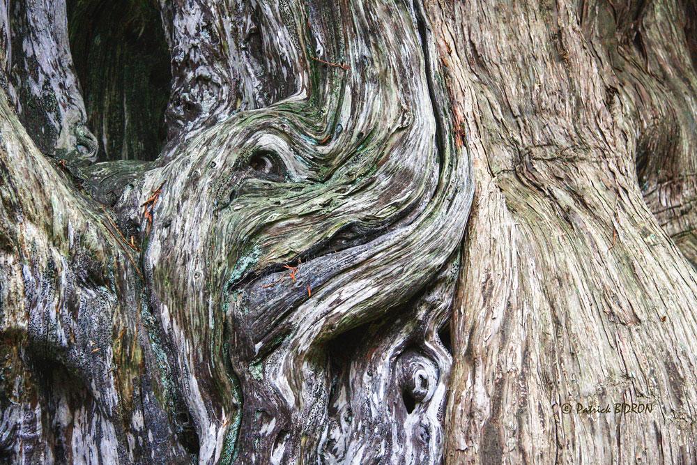 Photo of Mystérieuses créatures de bois