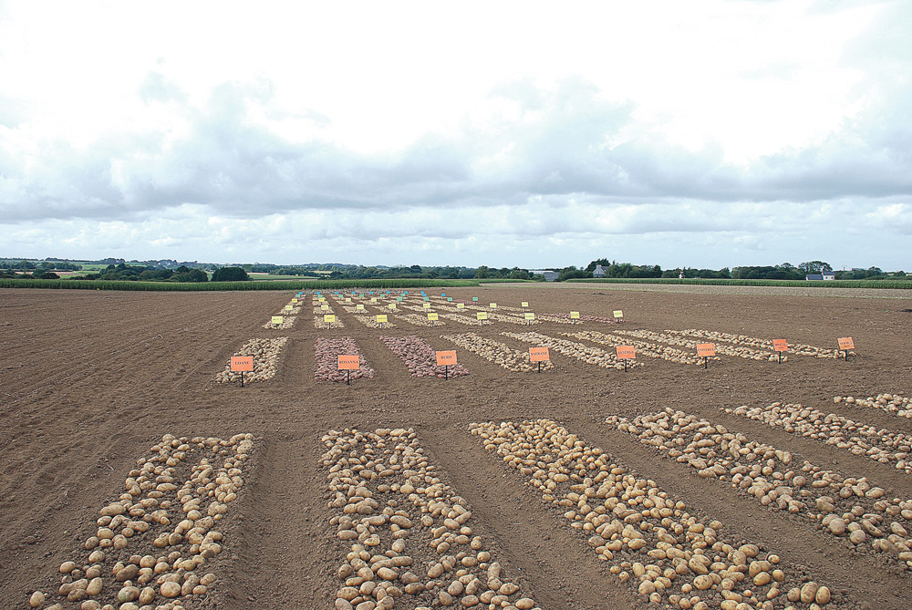 bretagne-captage-pomme-de-terre-qualite-production