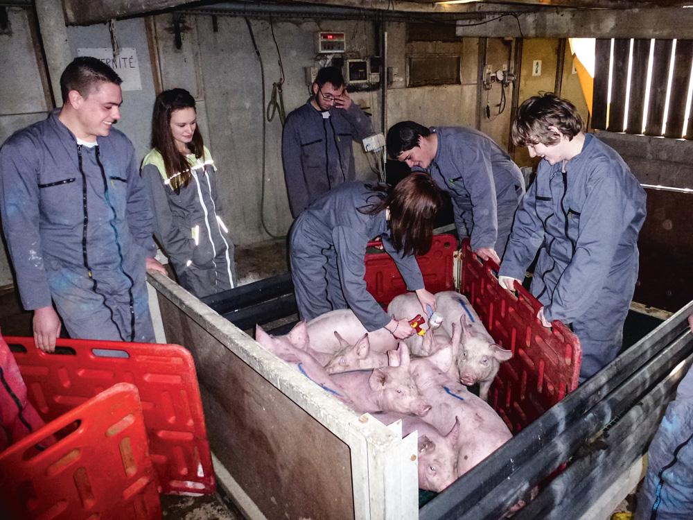 exploitation-pedagogie-formation-apprendre-elevage-porc