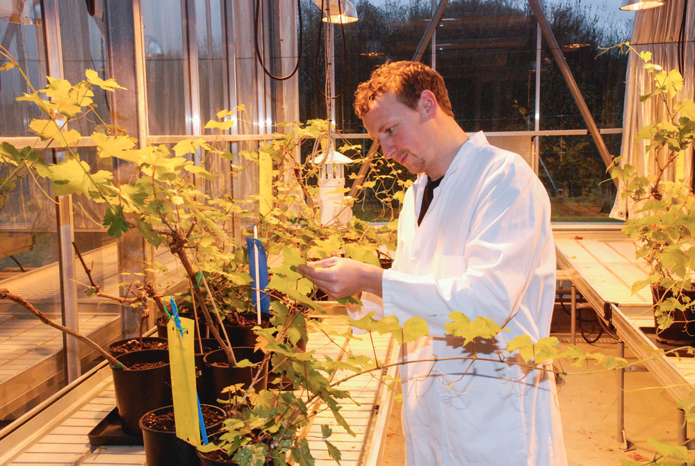 goemar-algue-phytosanitaire-economie-environnement-aliment