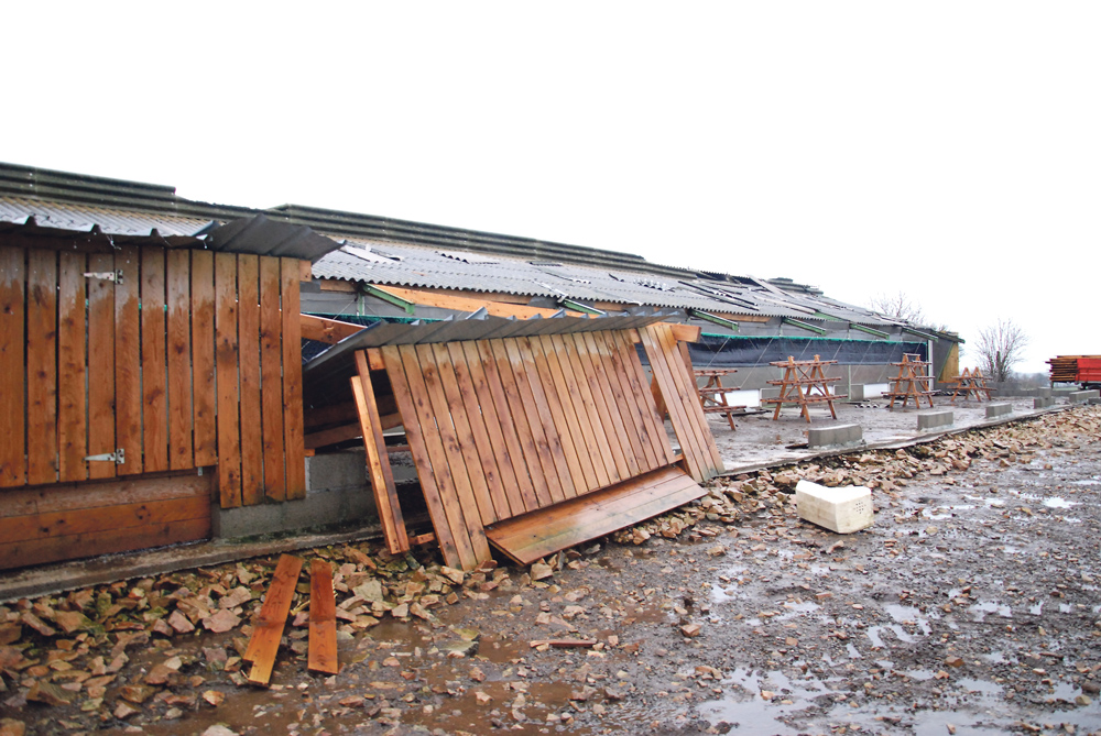 Photo of Poules réformées pour cause de tempête