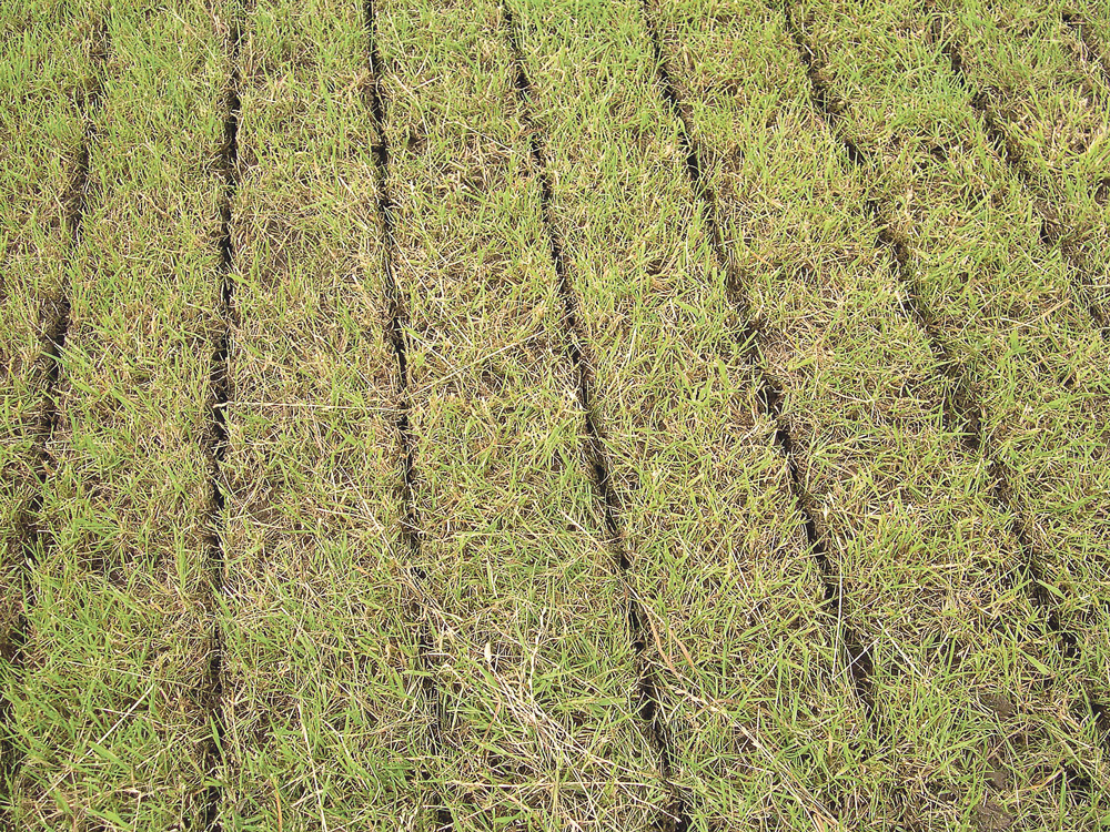 produit-organique-fertilisation-engrais-fumier-azote-prairie-amendant-volatilisation-lisier