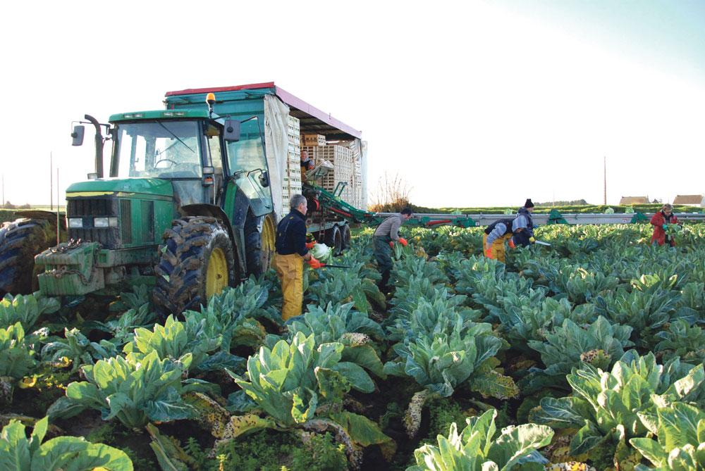 recolte-chou-fleur-legume-climat-pluie-eau-bretagne-plantation-production-culture-poireau