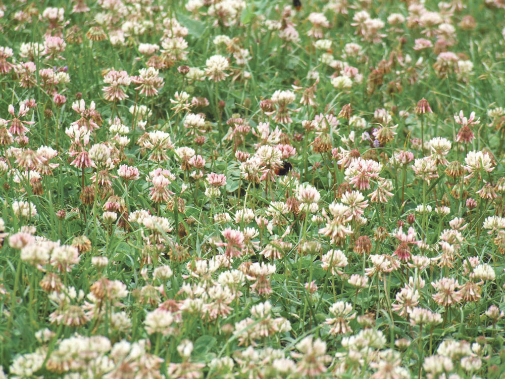 Photo of L'apprentissage du jardinage sans pesticides en bassin versant