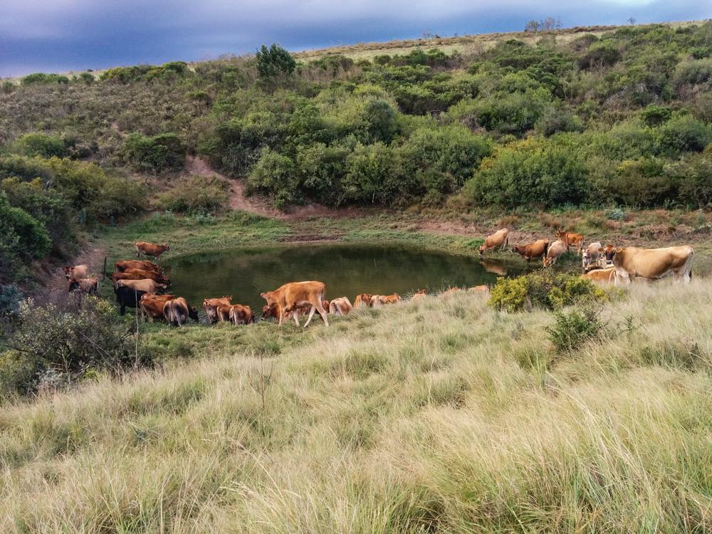 Photo of Un accueil chaleureux en Afrique du sud
