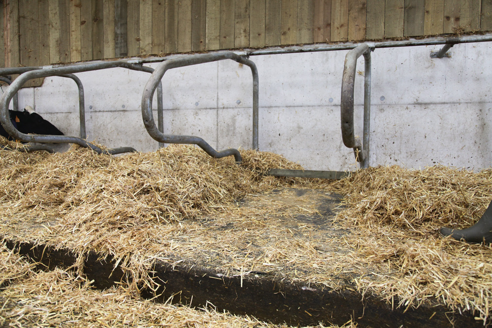 tapis-logette-confort-vache-laitiere-bovin-bien-etre-installation-batiment
