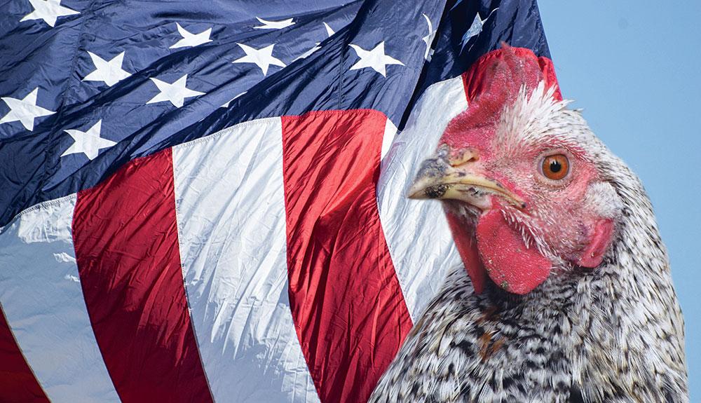 Photo of USA, 2e exportateur mondial de volailles