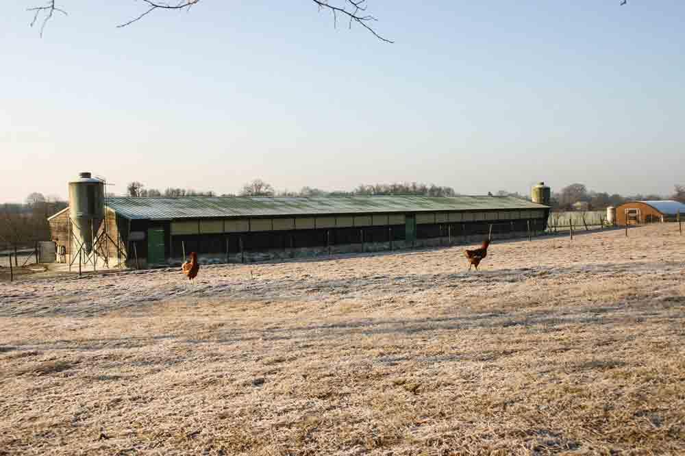 Photo of Grippe aviaire : abattage préventif étendu et indémnisation