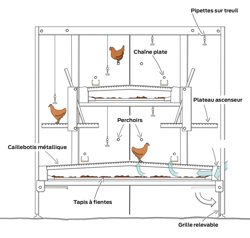 La voli re avenir de l 39 levage de poulettes journal paysan breton - Plan de poulailler gratuit a telecharger ...