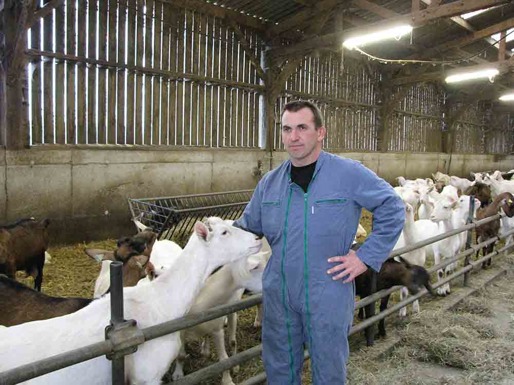 caprin-chevre-qualite-lait-nouvel-outil-pratique-risque-troupeau-lactation-longue