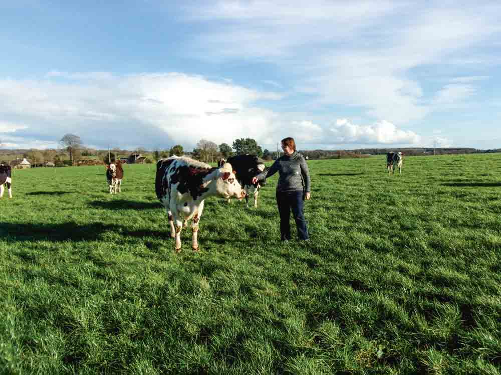 production-lait-herbe-paturage-vache-laitiere-troupeau-cout-alimentaire