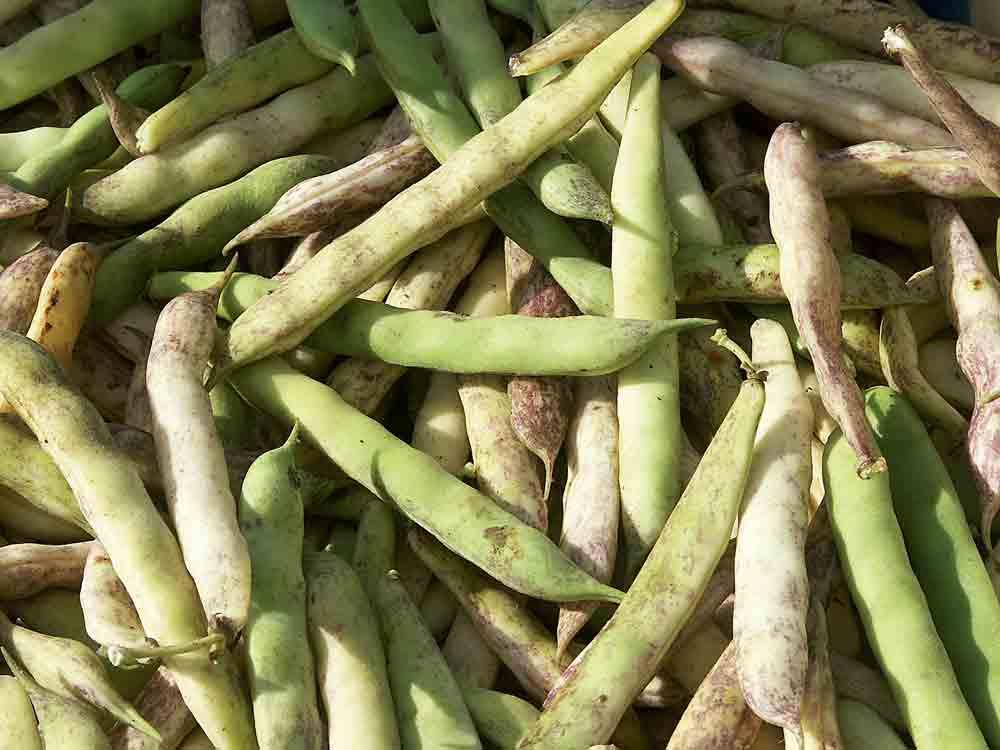 produit-agricole-legume-petit-pois-qualite-production-commission-europeenne-consommation