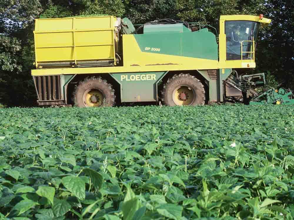 Photo of Le légume industrie cultive son avenir