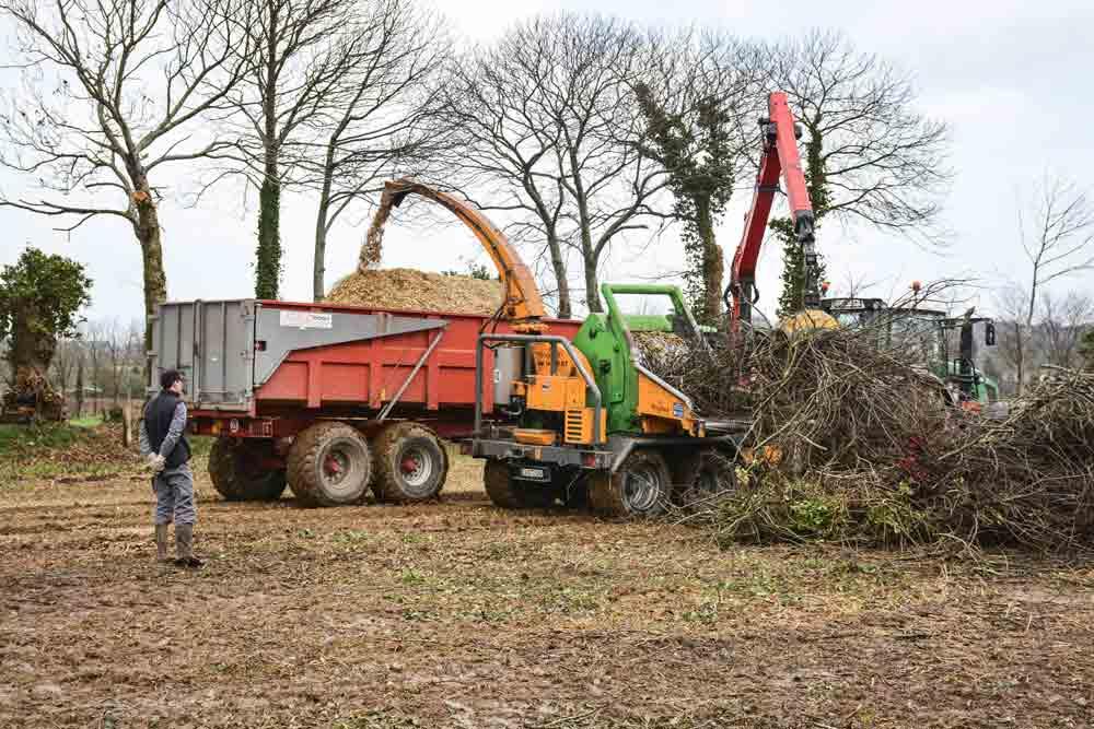Photo of Valoriser le bocage en bois énergie