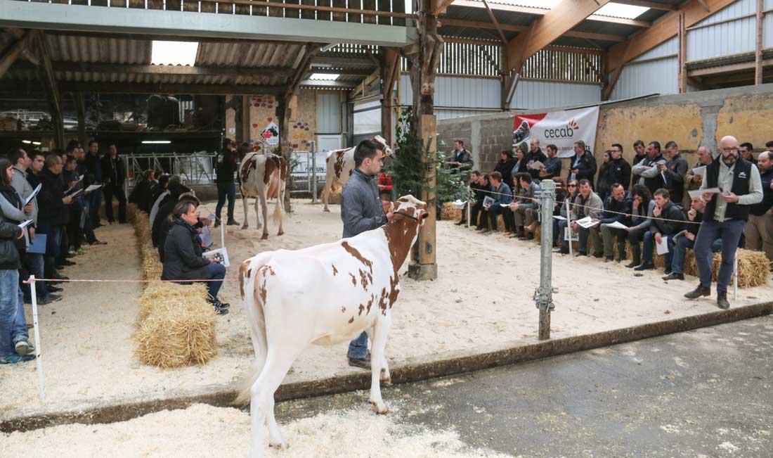 L'EARL de l'Orangerie, à Plumelec, présentait ses meilleures vaches aux adhérents du syndicat Prim'holstein l'après midi, à la suite de l'AG qui s'est tenue à Trédion mardi dernier, en présence de Katrin Lecornu, présidente de L'Européan Dairy Farmers.