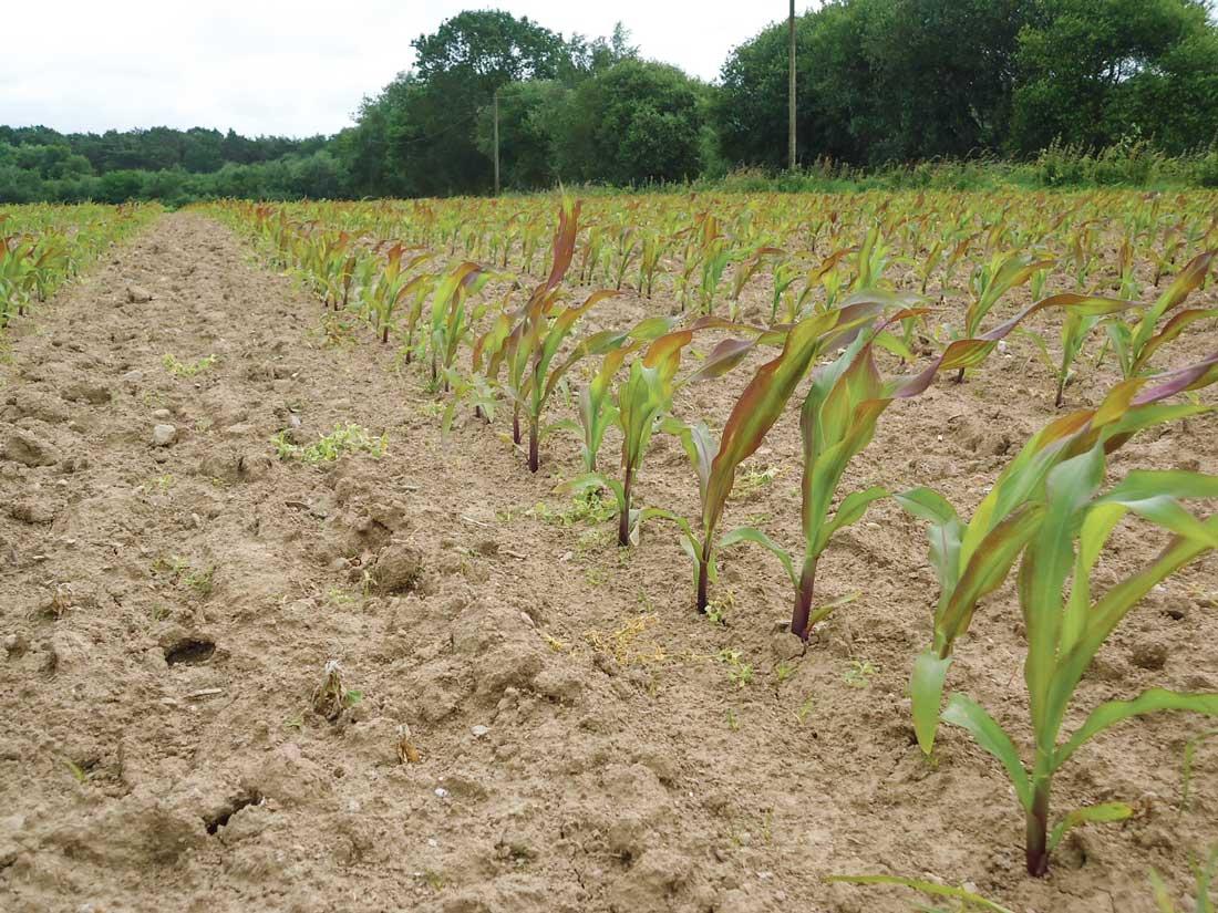 Photo of Engrais starter sur maïs : les formes micro-granulés au banc d'essai
