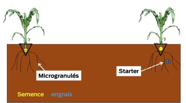 localisation du phosphore, sous forme engrais starter ou micro-granulés
