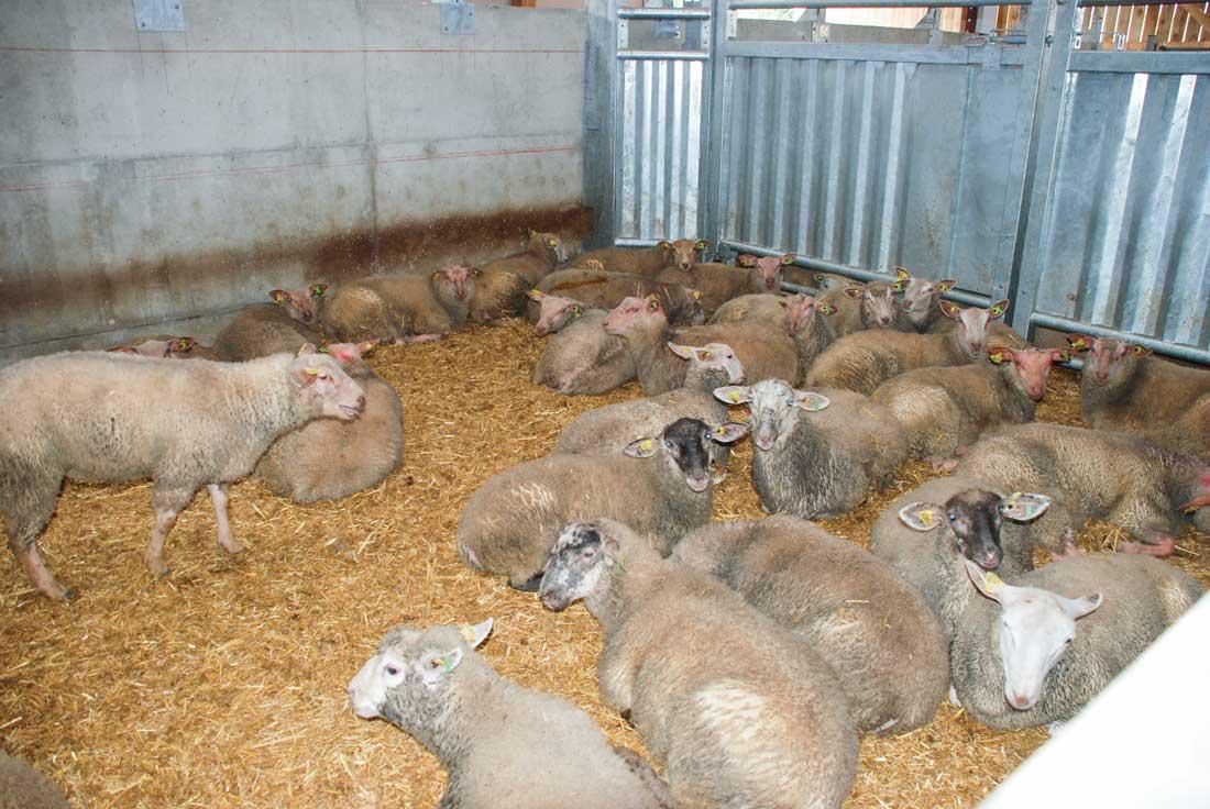 Photo of Renforcer le bien-être animal dans les abattoirs