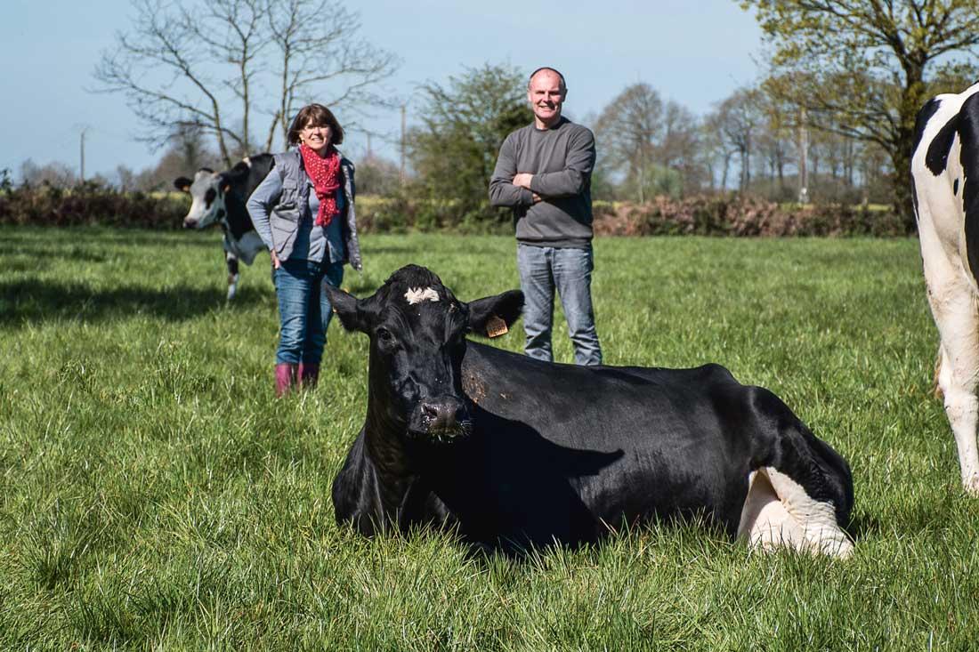 Christelle et Bruno Chevrel prennent la pose derrière Gessy, tête de souche des animaux sans cornes dans leur troupeau.