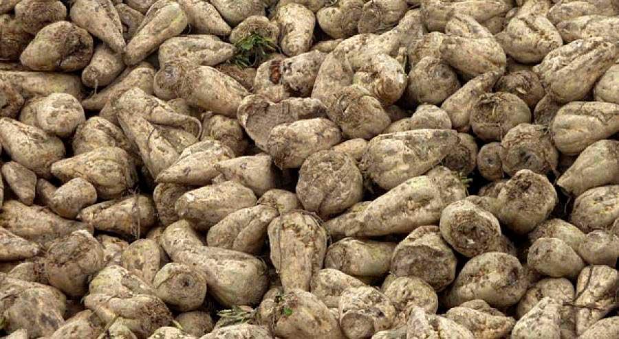 Photo of Sécheresse : la récolte de betterave revue en baisse à 80,9 t/ha