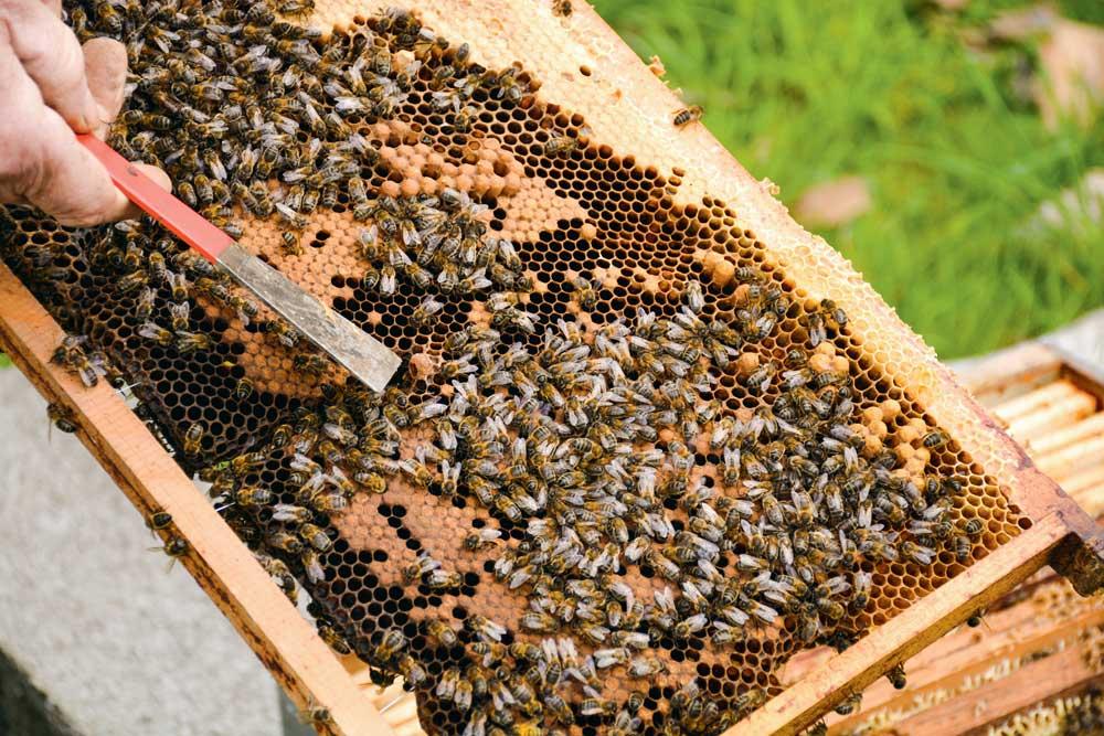 Photo of Agriculteurs et apiculteurs, deux partenaires au service de la nature