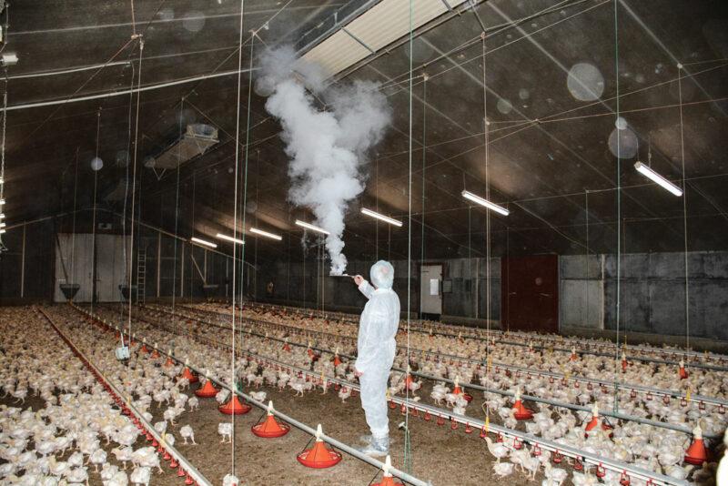 Le fumigène permet de comprendre et d'analyser les circuits d'air dans le poulailler.