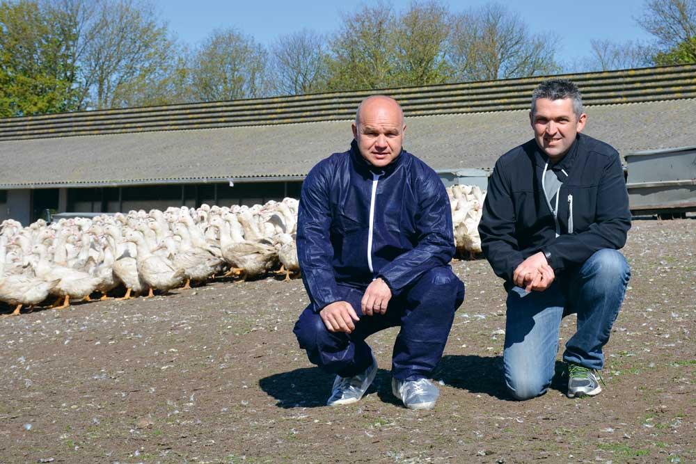 Photo of Influenza aviaire : réorganisation des élevages de canards